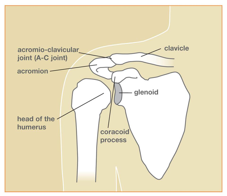 Shoulder Fracture Treatment Bangalore Clavicle Fracture Surgery