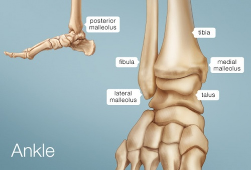 Ankle Joint Pain Treatment India